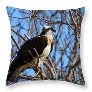 Osprey In Spring Throw Pillow