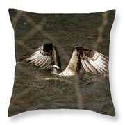 Osprey In The Creek Throw Pillow