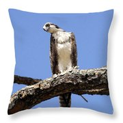 Osprey In The Trees Throw Pillow