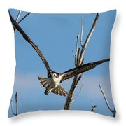 Osprey Launches Head On Throw Pillow