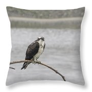 Osprey Looking Over The Rogue River Throw Pillow