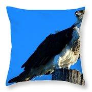 Osprey On A Pole Throw Pillow