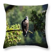 Osprey On Branch Throw Pillow
