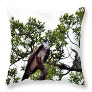 Osprey Perch  Throw Pillow