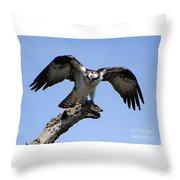 Osprey Power Throw Pillow