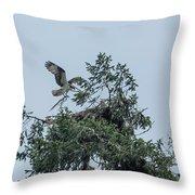 Osprey Reinforcing Its Nest 2017 Throw Pillow