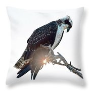 Osprey Silhouette Throw Pillow