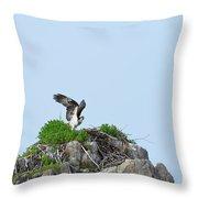 Osprey Sitting On A Ledge In Casco Bay  Throw Pillow