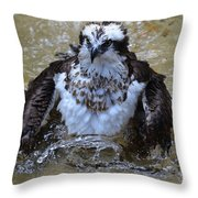 Osprey Splashing In Water Throw Pillow