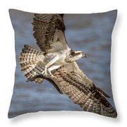 Osprey Take-out Throw Pillow