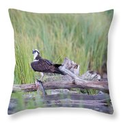 Osprey Victory Throw Pillow