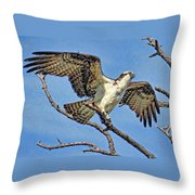 Osprey Wing Stretch Throw Pillow