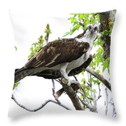Osprey With Snack Throw Pillow