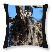 Ospreys In Spanish Moss Nest Throw Pillow