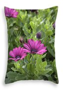 Osteospermum Flowers Throw Pillow