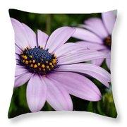 Osteospermum 'margarita Lilac' Throw Pillow