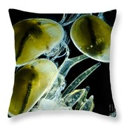 Ostracods, Lm Throw Pillow