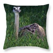 Ostrich Chick Throw Pillow