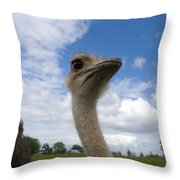 Ostrich High In The Sky Throw Pillow
