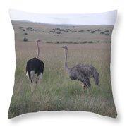 Ostrich Love Throw Pillow