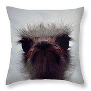Ostrich - The Sharp End Throw Pillow