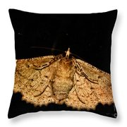 Other Side Of The Moth On The Window Throw Pillow