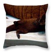 Otter Like It Throw Pillow