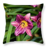 Purple Stella Doro Day Lily Throw Pillow