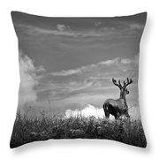 Out Of Nowhere Throw Pillow