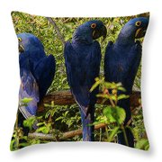 Out On A Limb 4 Throw Pillow