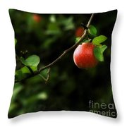 Out On A Limb  A Tempting Photograph Of A Tasty Ripe Red Apple On A Tree  Throw Pillow