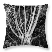 Outstretched Throw Pillow