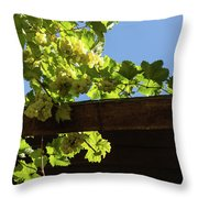 Overhead Grape Harvest - Summertime Dreaming Of Fine Wines Throw Pillow