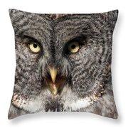 Owl 6 Throw Pillow