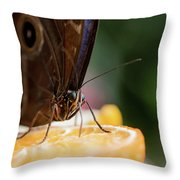 Owl Butterfly Feeding On An Orange Throw Pillow