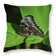 Owl Butterfly With Fantastic Distinctive Eyespots  Throw Pillow