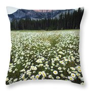 Ox-eyed Daisies And Cascade Mountain Throw Pillow