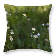 Oxeye Daisies Throw Pillow