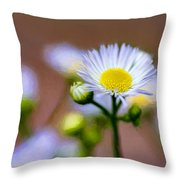 Oxeye Daisy - Paint Throw Pillow