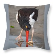 Oystercatcher Eating Clam Throw Pillow