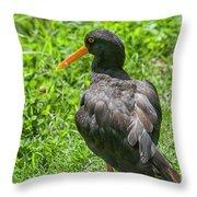 Oystercatcher Throw Pillow