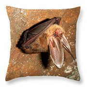 Ozark Big-ear Bat Throw Pillow