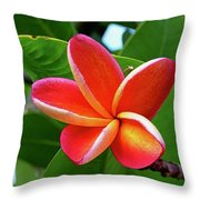 P1060059 Throw Pillow