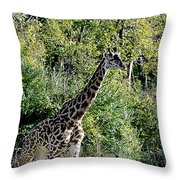 Pacer Throw Pillow