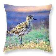 Pacific Golden Plover - 2 Throw Pillow