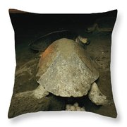 Pacific Or Olive Ridley Turtle Laying Throw Pillow