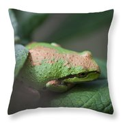 Pacific Treefrog Siesta Throw Pillow