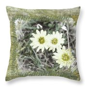 Package Of Three Throw Pillow