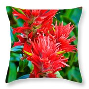 Paintbrush On Highline Trail In Glacier National Park-montana   Throw Pillow