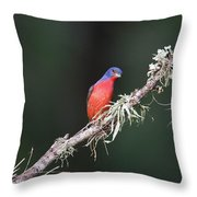 Painted Bunting Curiosity Throw Pillow